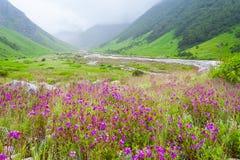 Vallei van bloemen, India Royalty-vrije Stock Afbeelding