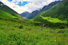 Vallei van Bloemen Nationaal Park, Uttarakhand, India Stock Foto's