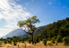 Vallei van de boom, het gras en de bergen op de achtergrond Stock Foto