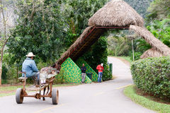 Vallei van Vinales op Cuba stock fotografie