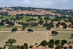 Vallei van wijngaarden Royalty-vrije Stock Foto