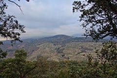 Valleien met Olijfbomen in Sierra Nevada -bergen, door bomen worden ontworpen die stock afbeeldingen