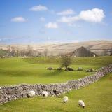 Valles de Yorkshire con la pared de piedra seca imagenes de archivo