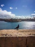 Valletta, Malta. Valletta landscape with pigeon, Malta Stock Image