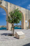 Valletta, Malta - May 9, 2017: Tree planted by HRH the Duke of Gloucester kg GCVO on 14 april 2012 to commemorate the diamond jubi Stock Image