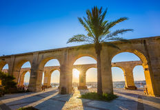 Valletta, Malta - Palm tree at the top of Valletta at sunrise. With blue sky Stock Images