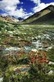 Valley. The amazing valley in Tibet Royalty Free Stock Image