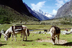Valley in the Andes. Setting up camp in a valley in the Peruvian Andes Stock Image