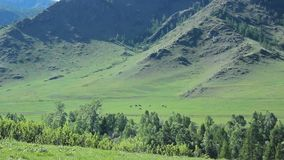 Valley background with horses. For use in presentations, manuals, design, etc stock footage