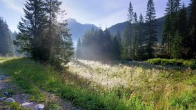 Valley Chocholowska at sunrise, Tatra Mountains. Poland stock footage
