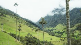 Valley of Cocora Palm Trees Fog royalty free stock images