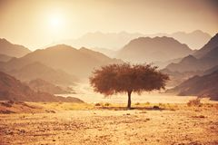 Valley in the desert with an acacia tree with mountain rock and sun. In the background Stock Images