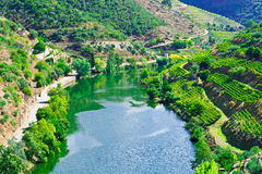 Valley  Douro Stock Image