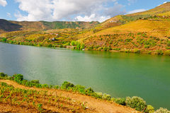 Valley of  Douro Royalty Free Stock Photos