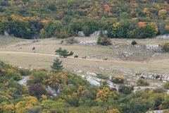 Valley in fall with horses running. royalty free stock image