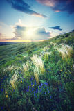 The valley of feather grass_1 Royalty Free Stock Photo