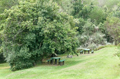 Valley of Ferns picnic spot Stock Photography