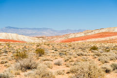 Valley of Fire desert plants Royalty Free Stock Images