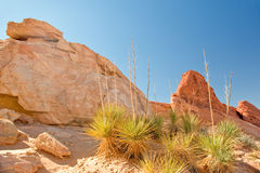 Valley of Fire landscape Royalty Free Stock Images