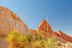 Valley of Fire Nevada Royalty Free Stock Photos