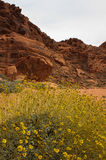 Valley of Fire Series 22 Stock Photography