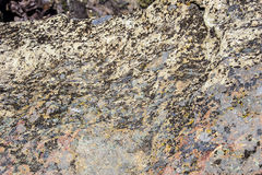 Valley floor of the Crooked River Royalty Free Stock Photo