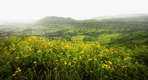 Valley of flowers Royalty Free Stock Photos