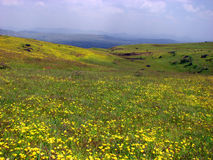 Valley of Flowers royalty free stock image