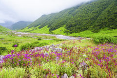 Valley of Flowers, uttarakhand india. Valley of Flowers the scenery is breathtaking, uttarakhand india Royalty Free Stock Photos