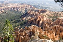 Valley full of Pines at Bryce Canyon royalty free stock photos