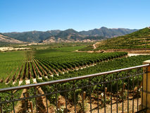 Valley full of vineyards, South America stock images