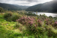 Valley  in Galloway forest park Royalty Free Stock Image