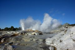 Valley of geysers in NZ Royalty Free Stock Image