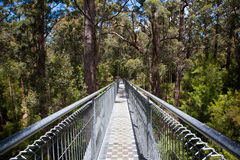 Valley of the Giants. Tree top walk at the Valley Of The Giants Between Denmark and Walpole WA Stock Image