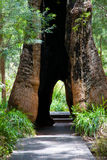 Valley of the Giants. Trees in the Valley of the Giants near Walpole, Western Australia Stock Photography
