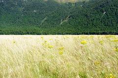 Valley grass drying off in summer Royalty Free Stock Image