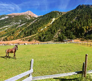 On valley grazing groomed horse farm Stock Image