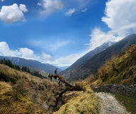 Valley in the Himalayas Royalty Free Stock Photography