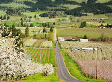 Valley in hood river Royalty Free Stock Photos
