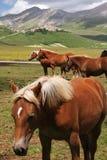 Valley horses Stock Photos