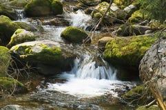 The valley Koscieliska 15. Polish mountains Tatra - The valley Kościeliska - koscieliski stream Royalty Free Stock Image