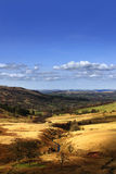 Valley landscape 2. Late afternoon springtime valley landscape in the Brecon Beacons Stock Photos