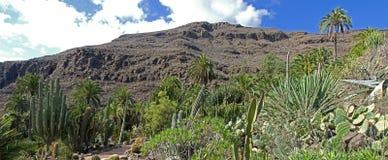 Valley of Los Palmitos Stock Photos
