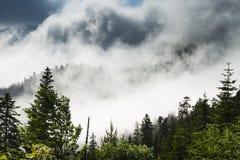 Valley mist Stock Image
