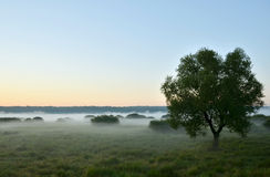 Valley in the mist. The tops of trees rising from the mist at dawn Royalty Free Stock Image