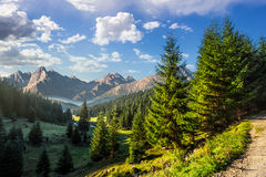 Valley between in morning light. Composite landscape. spruce forest on hillsides of mountain valley with high rocky peak in the far distance Royalty Free Stock Photos