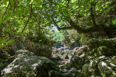 Valley of the mountain river on Caucasus Stock Photography