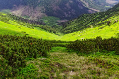 Valley in the mountains. In Europe Stock Images