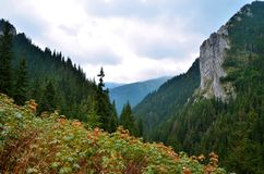 Valley in mountains Royalty Free Stock Image