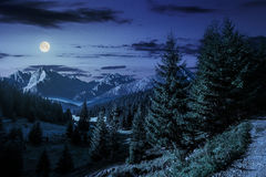 Valley between at night. Composite landscape. spruce forest on hillsides of mountain valley with high rocky peak in the far distance at night in full moon light Royalty Free Stock Images